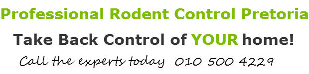 rodent & rat control pretoria