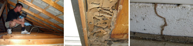 Termite Control Pretoria