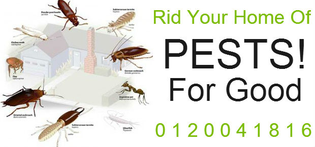 Pest Control in Rosslyn