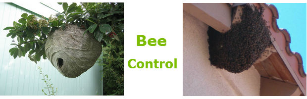 Bee control in Pretoria