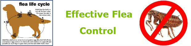fleas control in pretoria